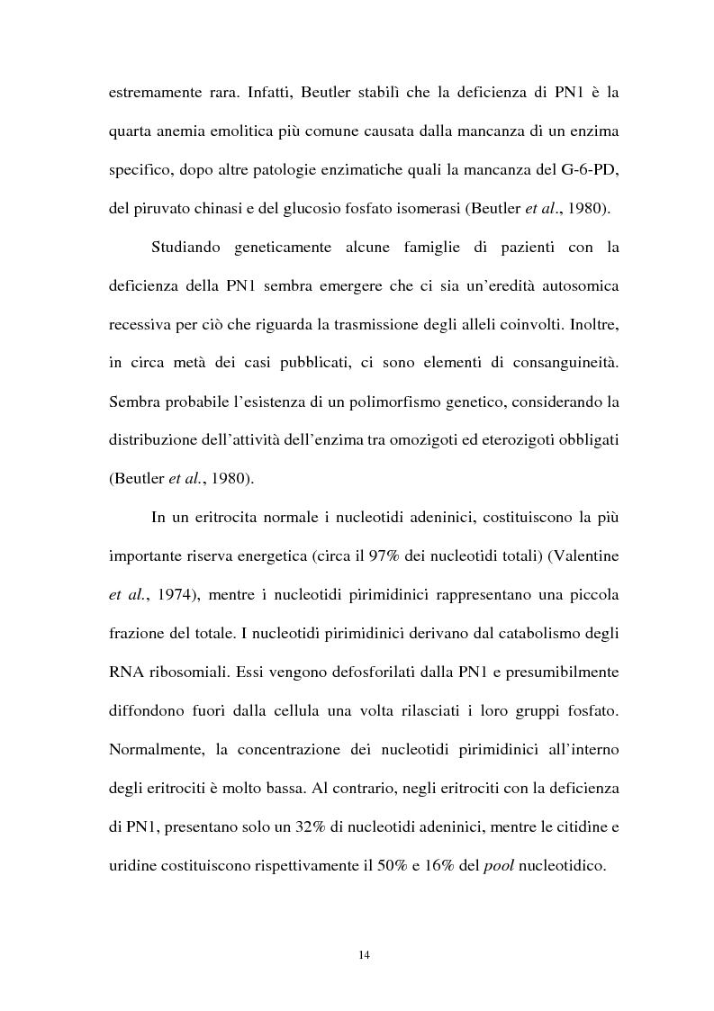 Anteprima della tesi: Pirimidina 5' nucleotidasi da eritrocita umano: clonaggio ed espressione del cdna, Pagina 10