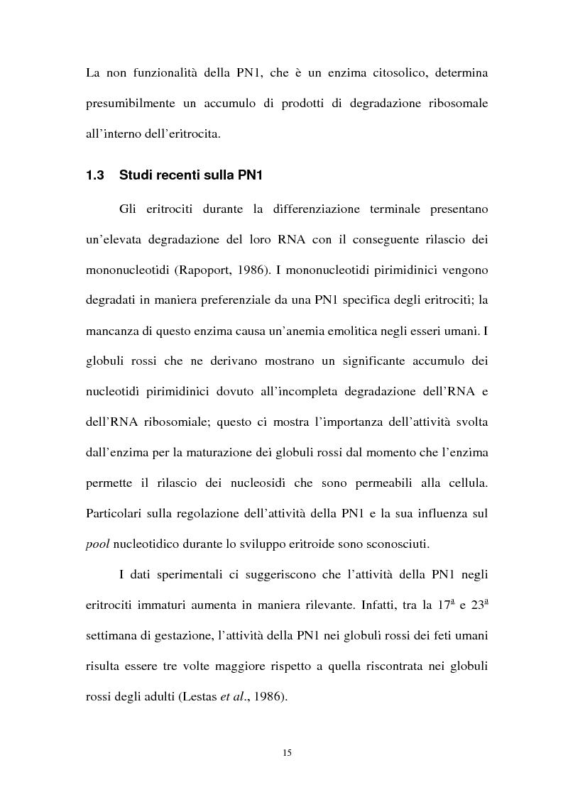 Anteprima della tesi: Pirimidina 5' nucleotidasi da eritrocita umano: clonaggio ed espressione del cdna, Pagina 11