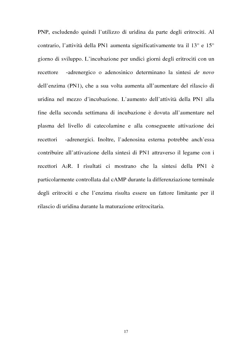 Anteprima della tesi: Pirimidina 5' nucleotidasi da eritrocita umano: clonaggio ed espressione del cdna, Pagina 13