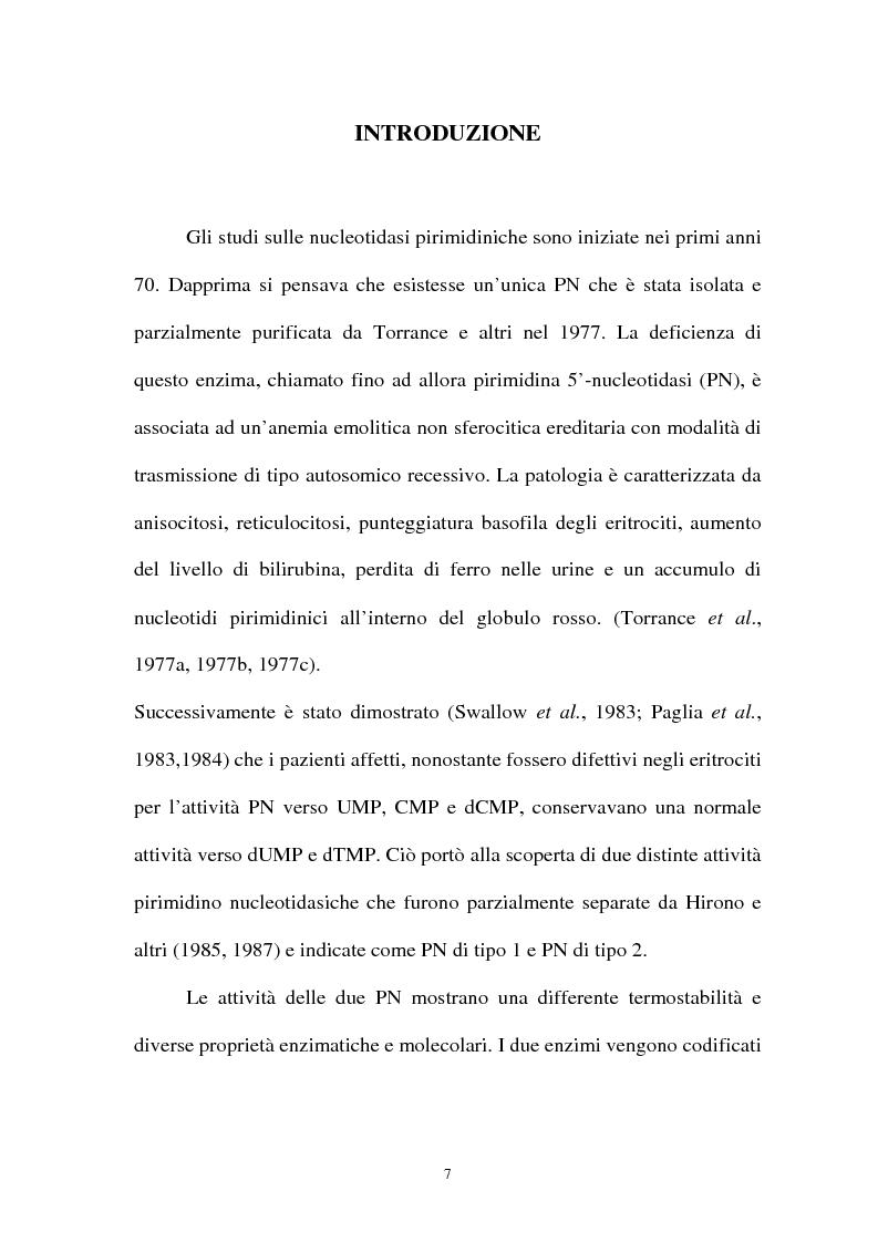 Anteprima della tesi: Pirimidina 5' nucleotidasi da eritrocita umano: clonaggio ed espressione del cdna, Pagina 3