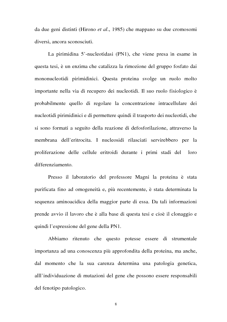 Anteprima della tesi: Pirimidina 5' nucleotidasi da eritrocita umano: clonaggio ed espressione del cdna, Pagina 4