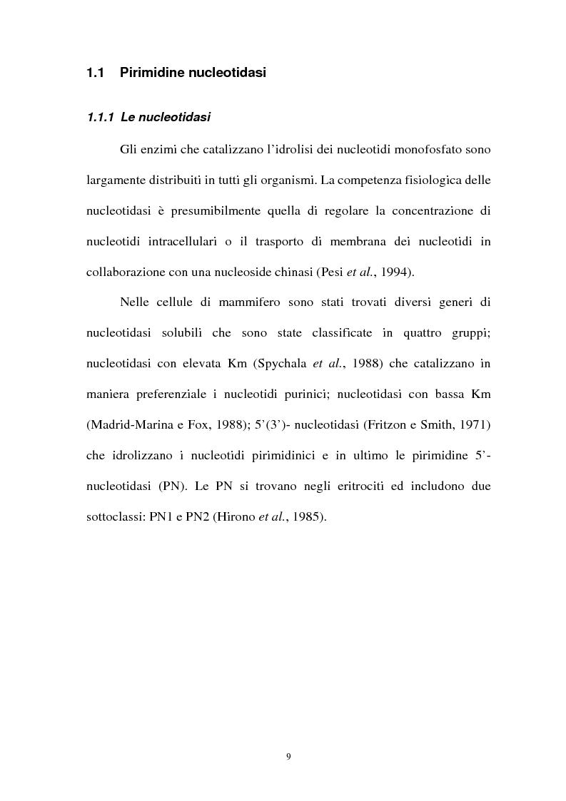 Anteprima della tesi: Pirimidina 5' nucleotidasi da eritrocita umano: clonaggio ed espressione del cdna, Pagina 5