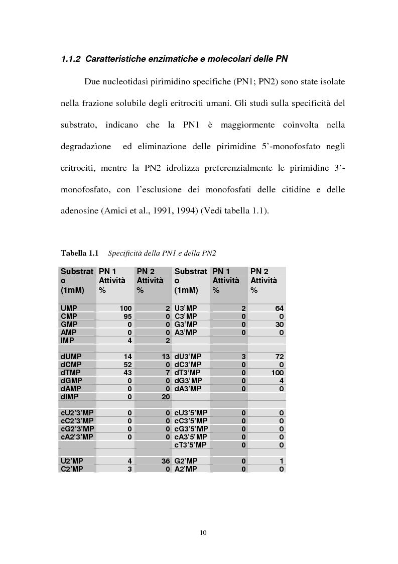 Anteprima della tesi: Pirimidina 5' nucleotidasi da eritrocita umano: clonaggio ed espressione del cdna, Pagina 6