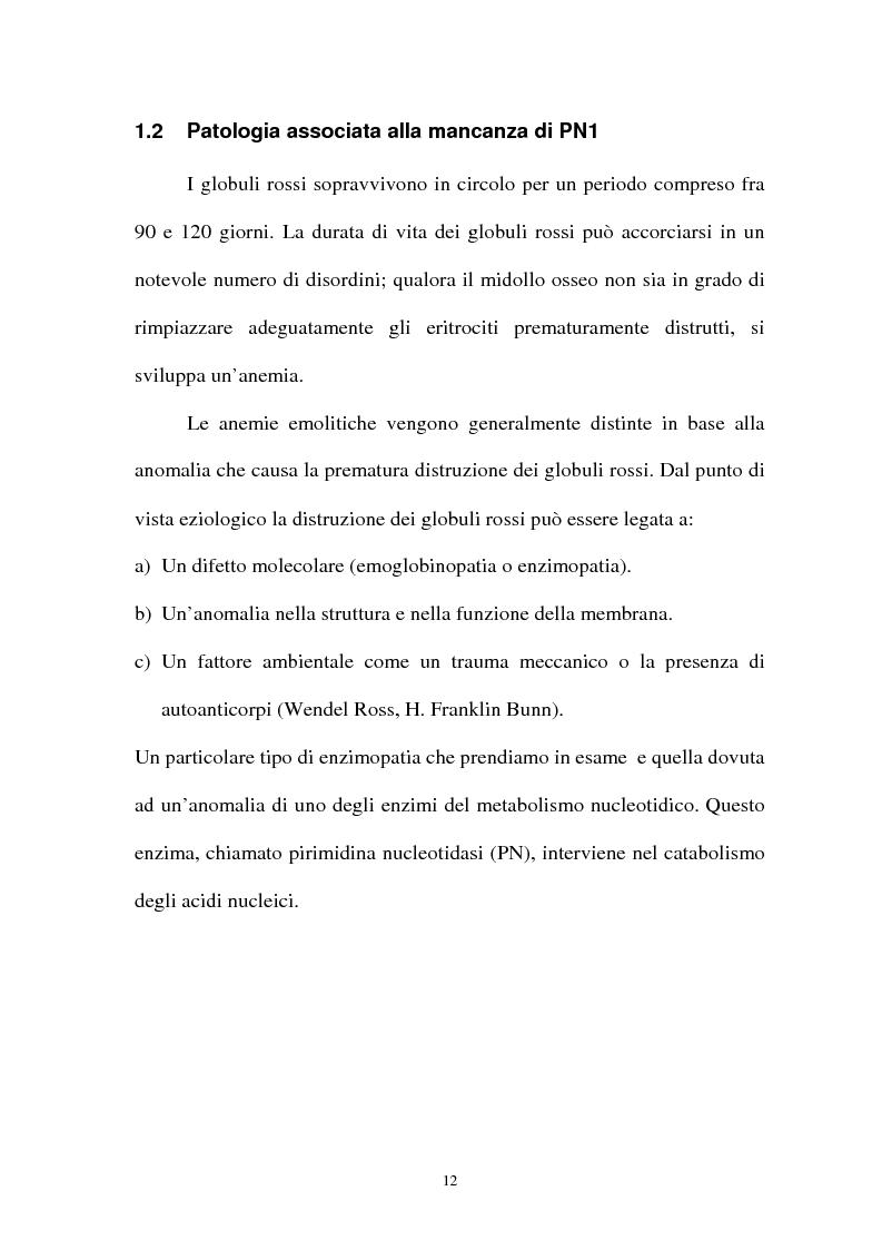 Anteprima della tesi: Pirimidina 5' nucleotidasi da eritrocita umano: clonaggio ed espressione del cdna, Pagina 8