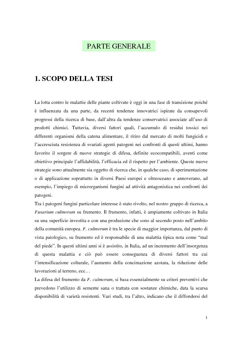 Anteprima della tesi: Aspetti dell'interazione di Gliocladium roseum e Trichoderma spp. con Fusarium culmorum e frumento, Pagina 1