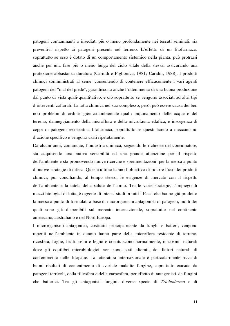 Anteprima della tesi: Aspetti dell'interazione di Gliocladium roseum e Trichoderma spp. con Fusarium culmorum e frumento, Pagina 11