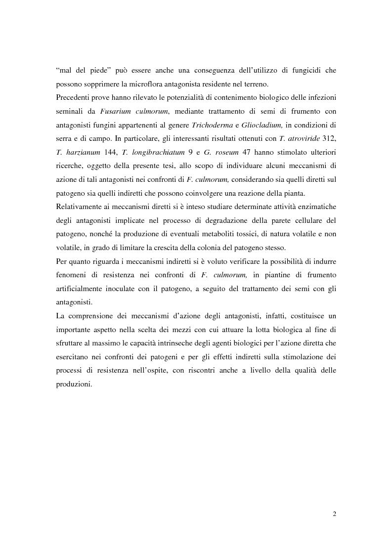 Anteprima della tesi: Aspetti dell'interazione di Gliocladium roseum e Trichoderma spp. con Fusarium culmorum e frumento, Pagina 2