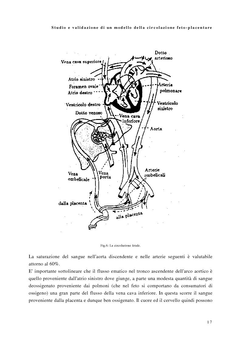 Anteprima della tesi: Studio e validazione di un modello di circolazione fetoplacentare, Pagina 13