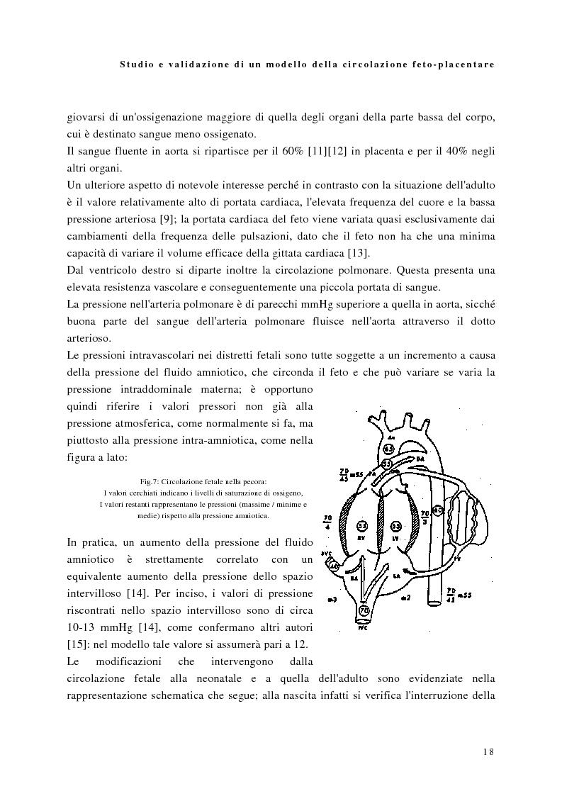 Anteprima della tesi: Studio e validazione di un modello di circolazione fetoplacentare, Pagina 14