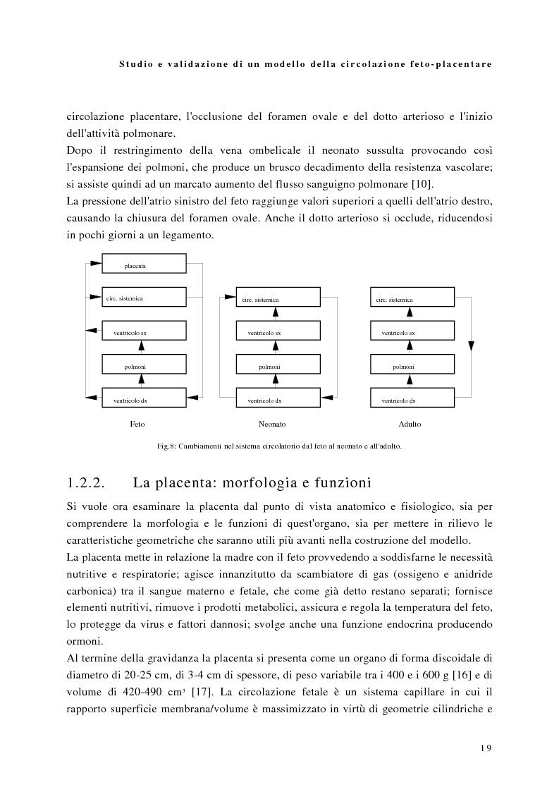 Anteprima della tesi: Studio e validazione di un modello di circolazione fetoplacentare, Pagina 15