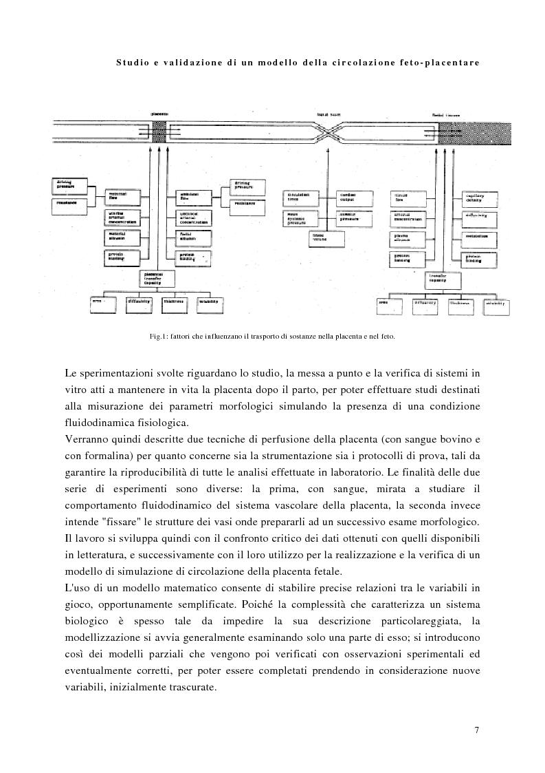 Anteprima della tesi: Studio e validazione di un modello di circolazione fetoplacentare, Pagina 3