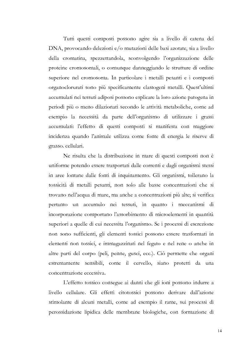 Anteprima della tesi: Valutazione dell'inquinamento da metalli pesanti nell'area antistante l'ex complesso industriale di Bagnoli, Pagina 14