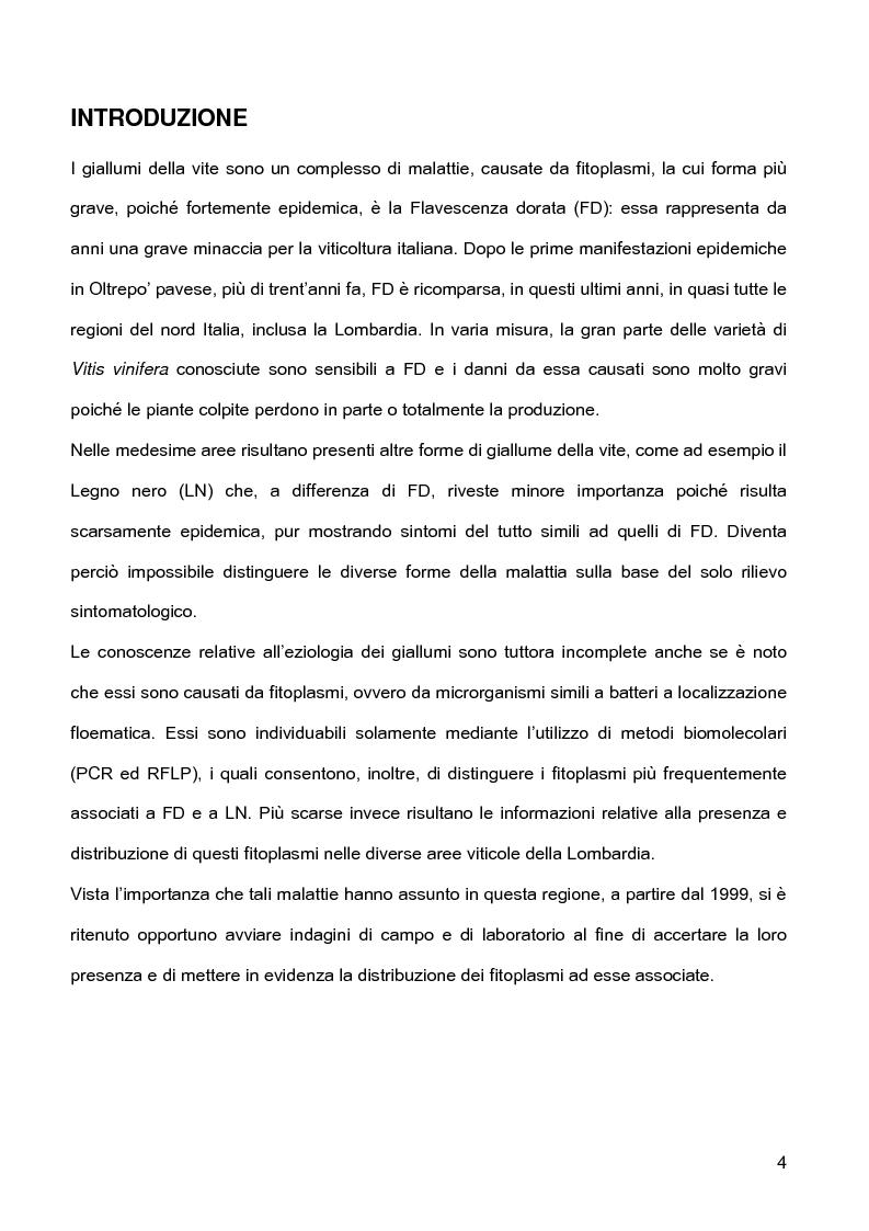 Anteprima della tesi: Indagini sulla presenza e diffusione dei giallumi della vite in Lombardia, Pagina 1