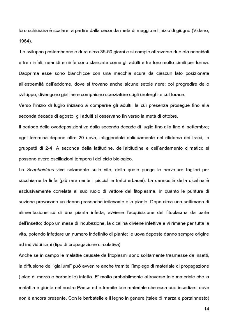Anteprima della tesi: Indagini sulla presenza e diffusione dei giallumi della vite in Lombardia, Pagina 11
