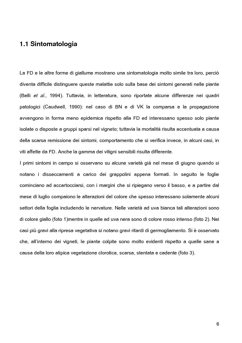 Anteprima della tesi: Indagini sulla presenza e diffusione dei giallumi della vite in Lombardia, Pagina 3