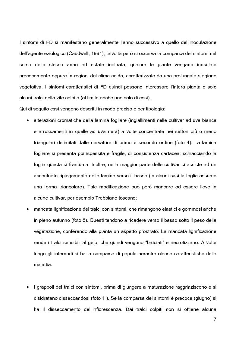 Anteprima della tesi: Indagini sulla presenza e diffusione dei giallumi della vite in Lombardia, Pagina 4