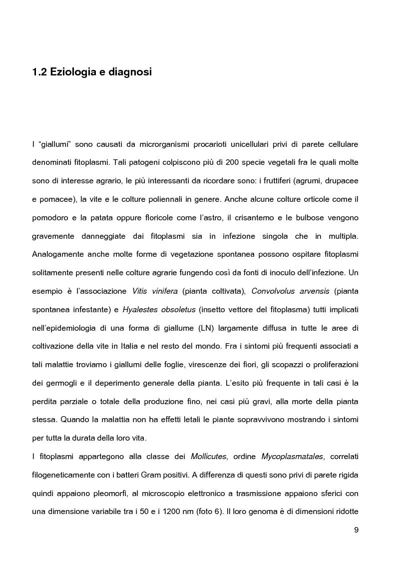 Anteprima della tesi: Indagini sulla presenza e diffusione dei giallumi della vite in Lombardia, Pagina 6