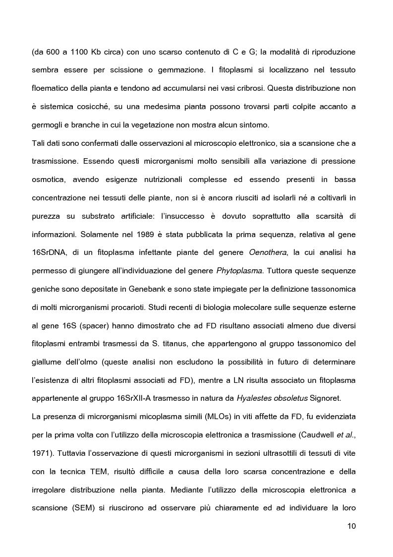 Anteprima della tesi: Indagini sulla presenza e diffusione dei giallumi della vite in Lombardia, Pagina 7