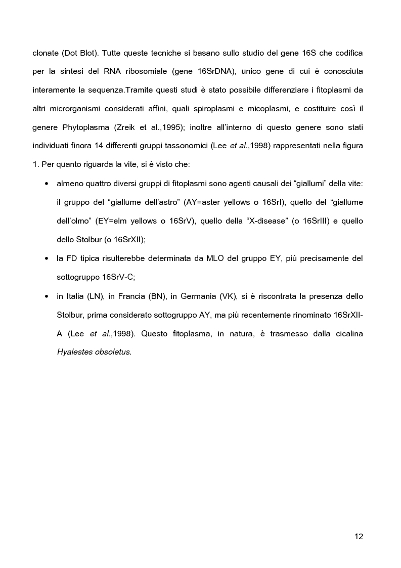 Anteprima della tesi: Indagini sulla presenza e diffusione dei giallumi della vite in Lombardia, Pagina 9