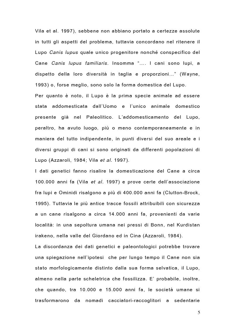 Anteprima della tesi: Indagine sulla popolazione canina nell'area di Arcavacata di Rende (CS), Pagina 5