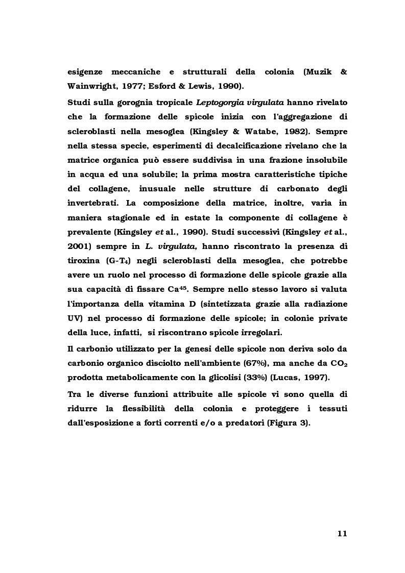 Anteprima della tesi: Biologia di alcuni Gorgonacei mediterranei in differenti condizioni sperimentali, Pagina 10