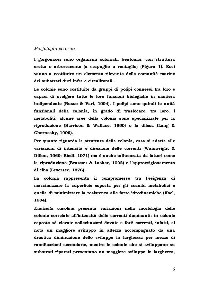 Anteprima della tesi: Biologia di alcuni Gorgonacei mediterranei in differenti condizioni sperimentali, Pagina 4