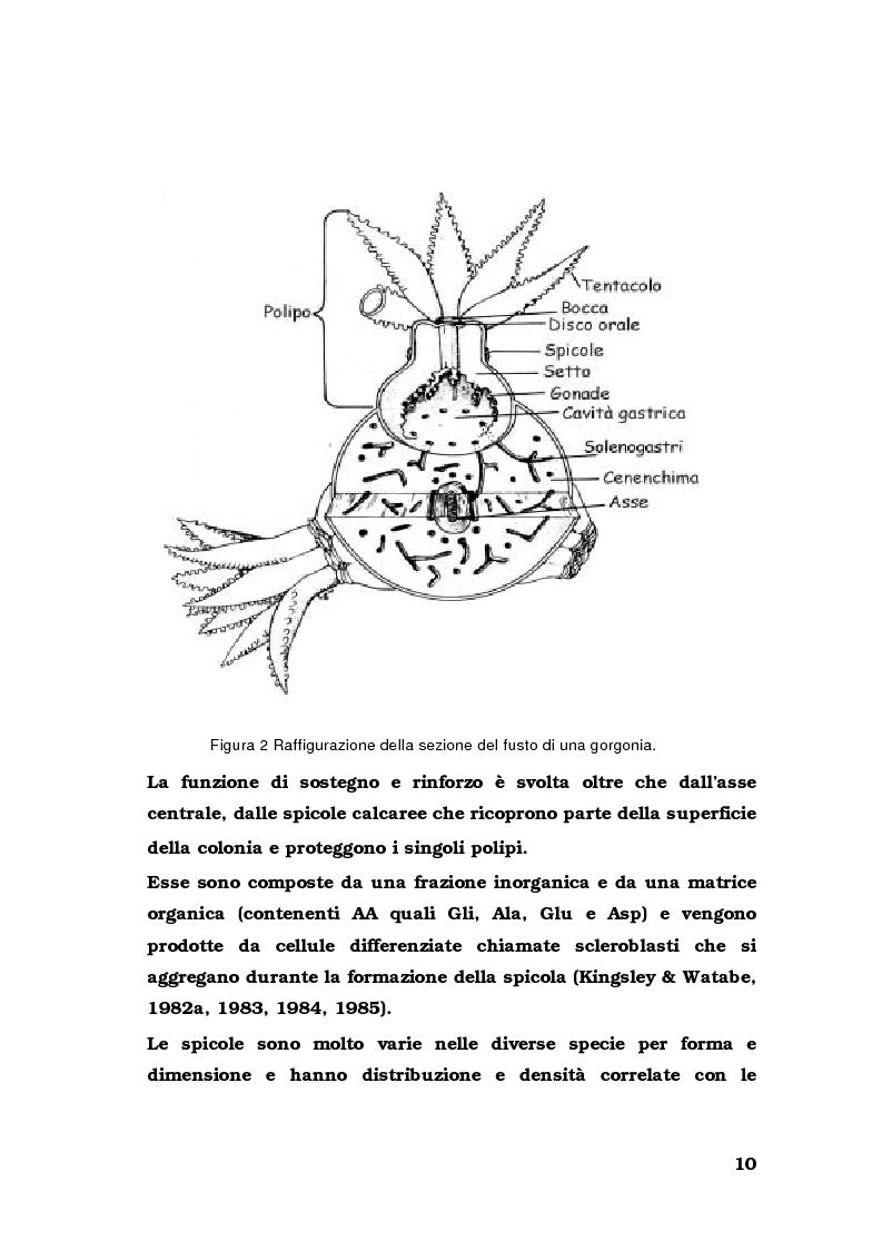Anteprima della tesi: Biologia di alcuni Gorgonacei mediterranei in differenti condizioni sperimentali, Pagina 9