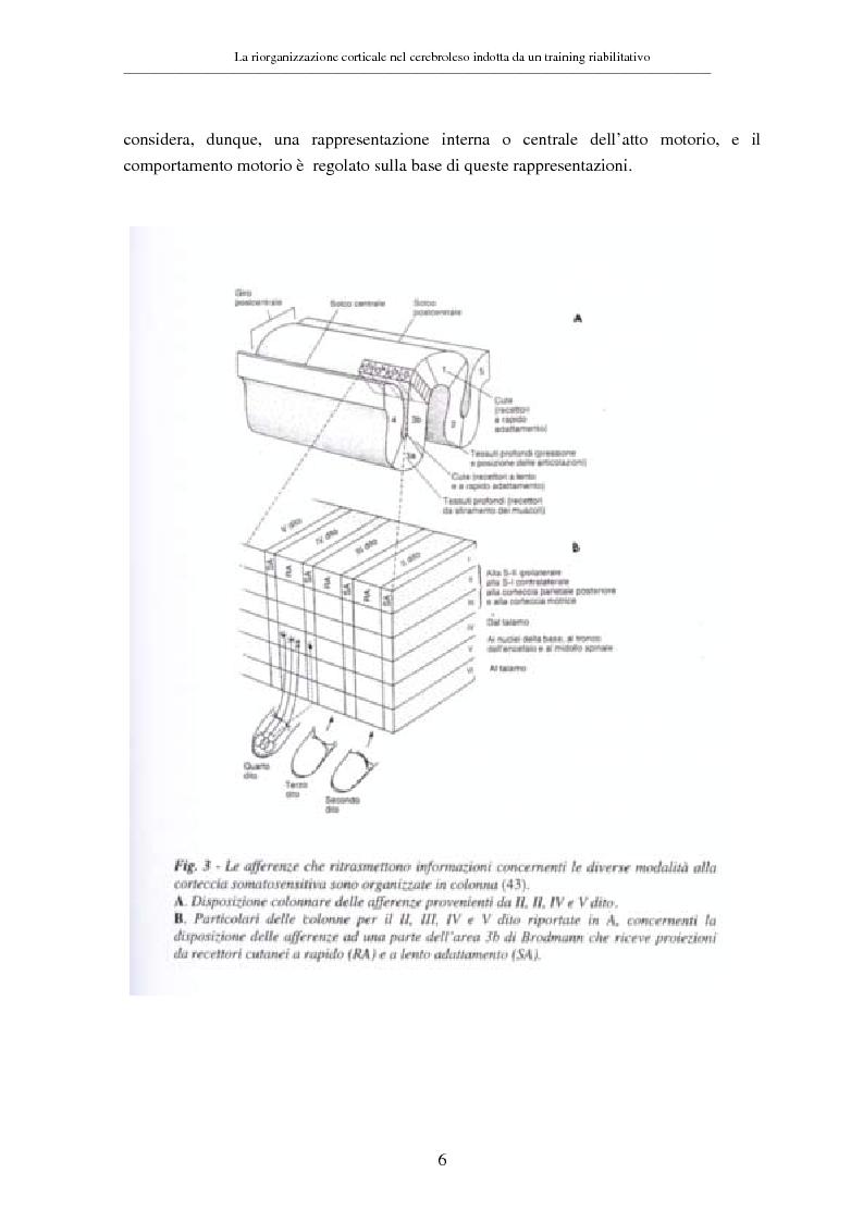 Anteprima della tesi: La riorganizzazione corticale nel cerebroleso indotta da un training riabilitativo, Pagina 10