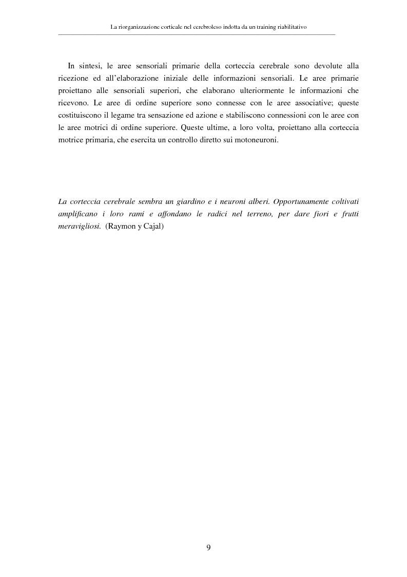 Anteprima della tesi: La riorganizzazione corticale nel cerebroleso indotta da un training riabilitativo, Pagina 13
