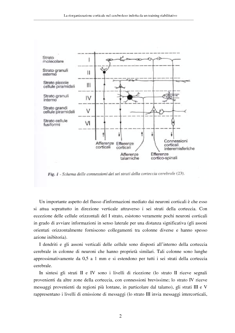 Anteprima della tesi: La riorganizzazione corticale nel cerebroleso indotta da un training riabilitativo, Pagina 6