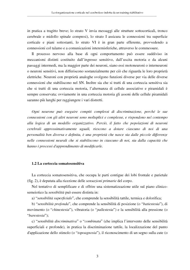 Anteprima della tesi: La riorganizzazione corticale nel cerebroleso indotta da un training riabilitativo, Pagina 7