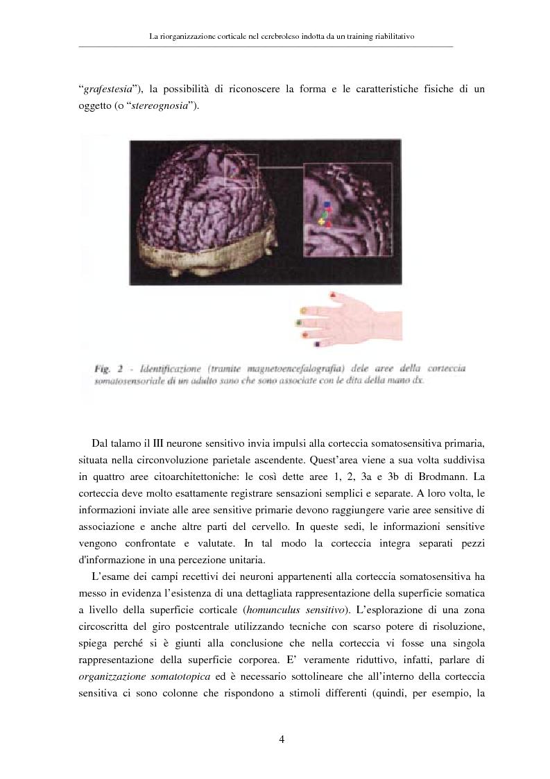 Anteprima della tesi: La riorganizzazione corticale nel cerebroleso indotta da un training riabilitativo, Pagina 8