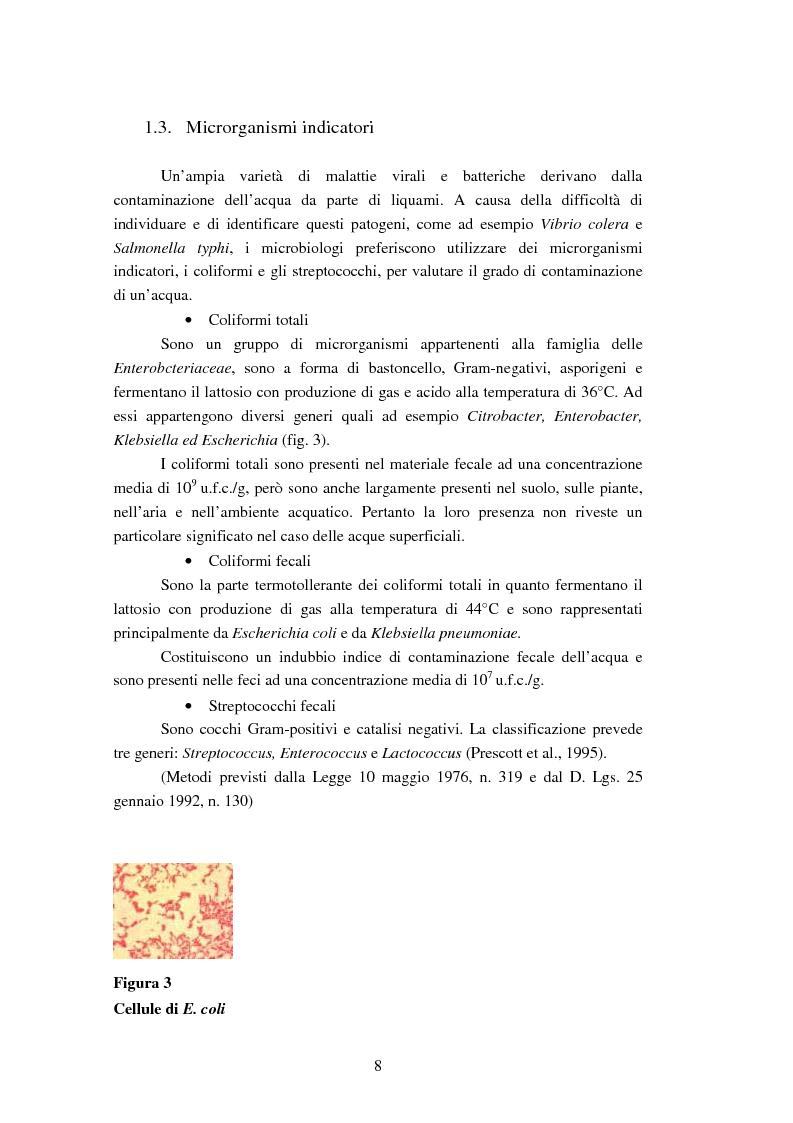 Anteprima della tesi: Analisi dei ribotipi dei ceppi di Escherichia coli isolati dal lago di Varna (Bz), Pagina 5