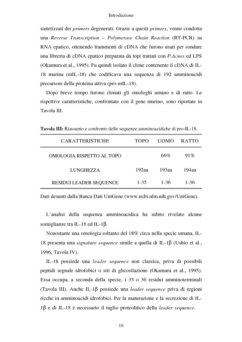 Anteprima della tesi: Produzione di vaccini per la terapia genica mediante trasduzione di Interleuchina 18 in cellule di carcinoma mammario murino, Pagina 13