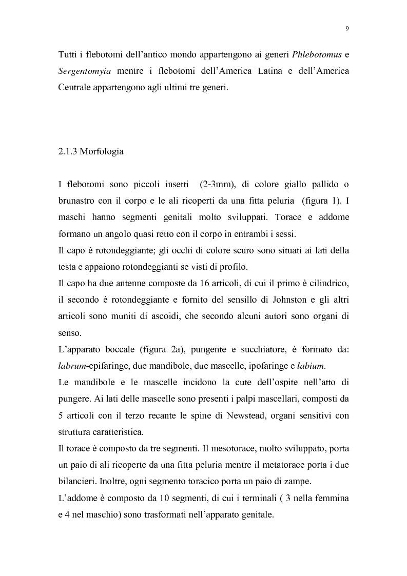 Anteprima della tesi: Distribuzione dei vettori di Leishmaniosi canina in provincia di Alessandria, Pagina 6