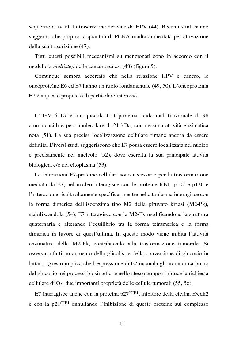 Anteprima della tesi: Cancro della cervice uterina ed espressione dell'oncoproteina HPV16 e7, Pagina 14