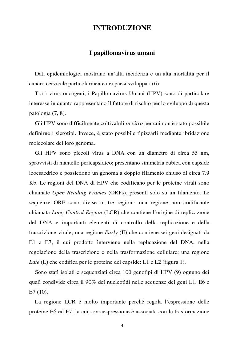 Anteprima della tesi: Cancro della cervice uterina ed espressione dell'oncoproteina HPV16 e7, Pagina 4