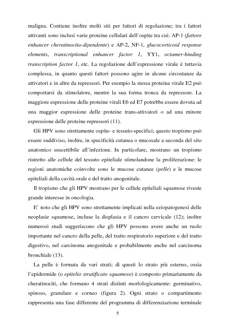 Anteprima della tesi: Cancro della cervice uterina ed espressione dell'oncoproteina HPV16 e7, Pagina 5