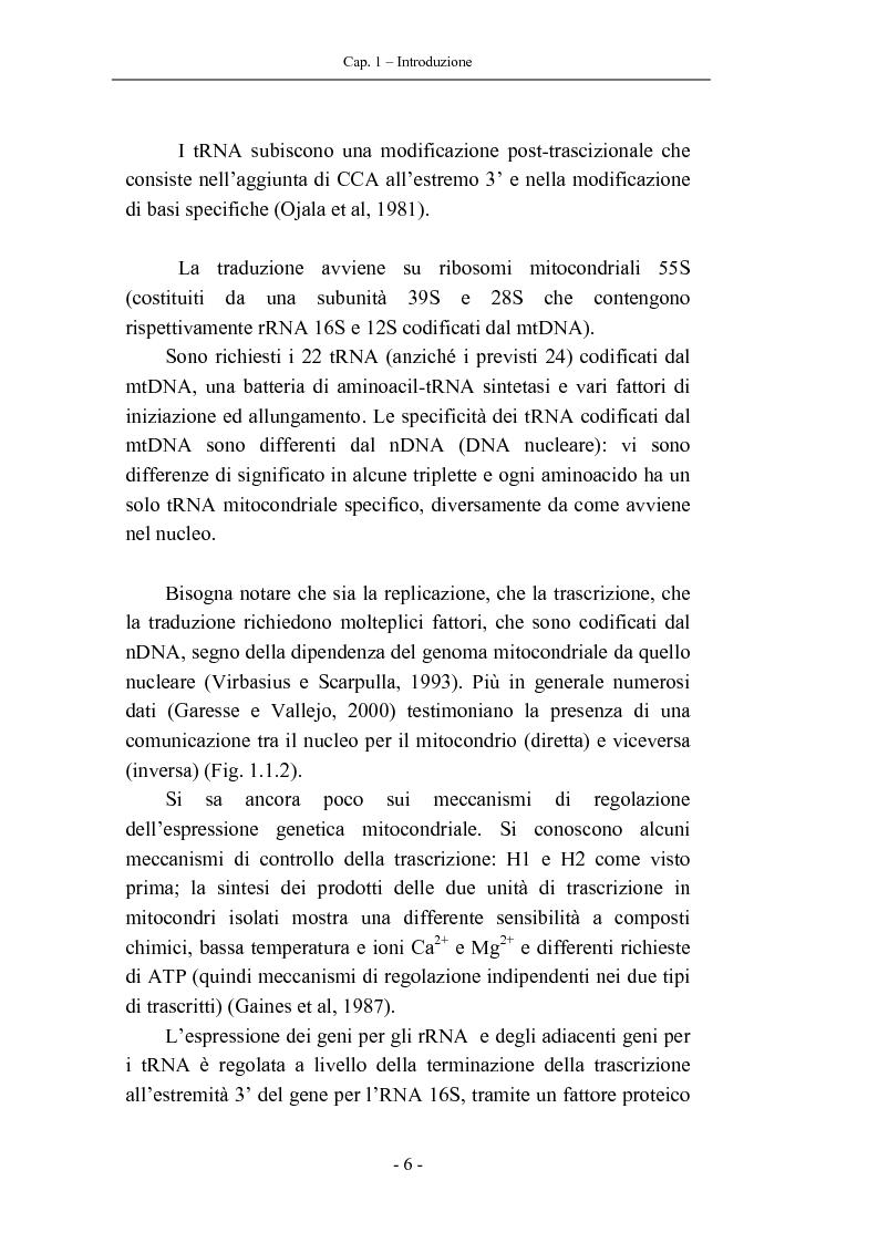 Anteprima della tesi: Trascrizione del DNA mitocondriale nell'invecchiamento, Pagina 10