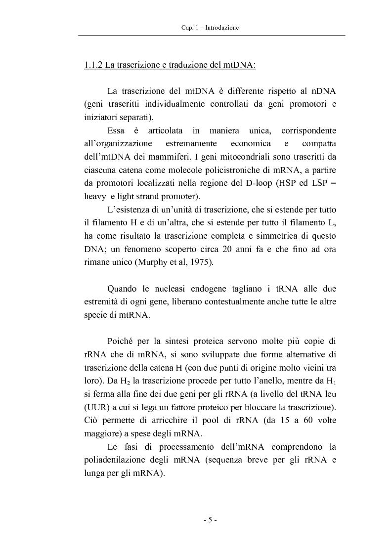 Anteprima della tesi: Trascrizione del DNA mitocondriale nell'invecchiamento, Pagina 9