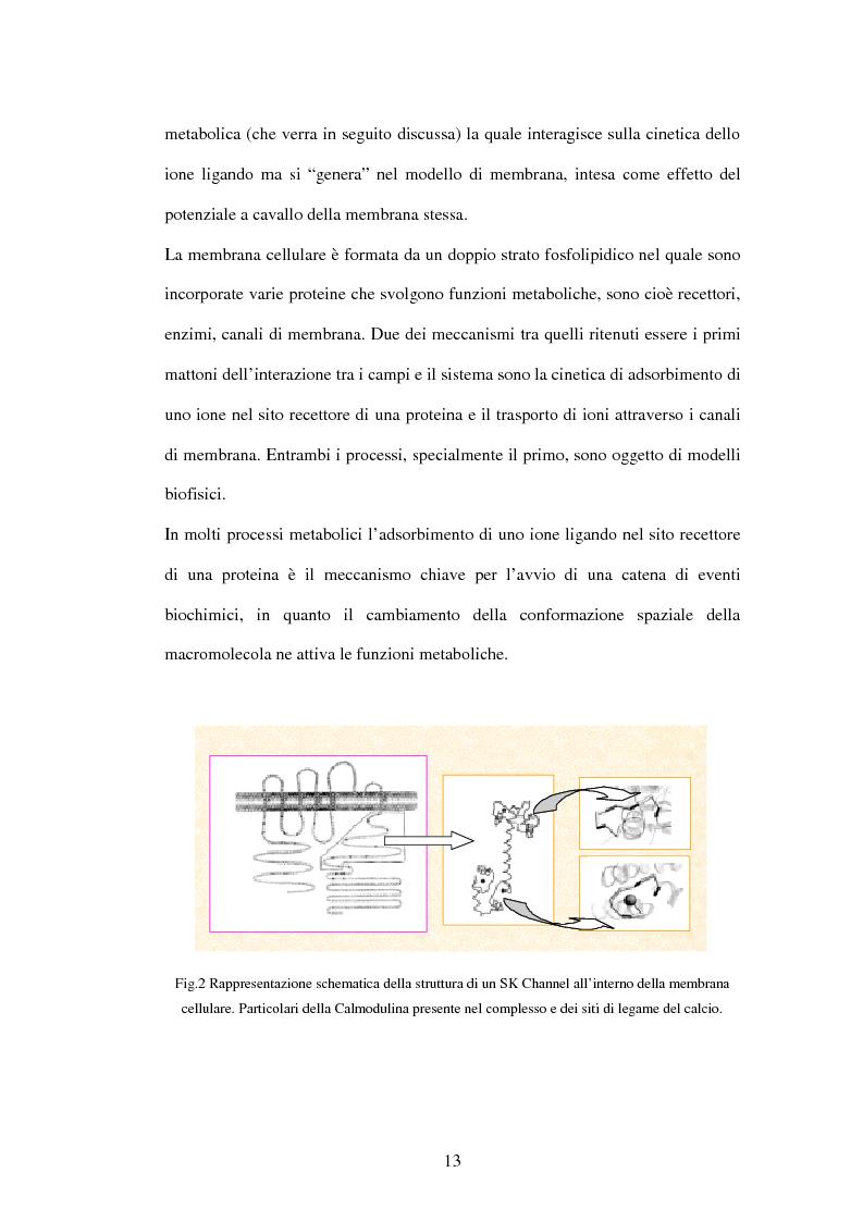 Anteprima della tesi: Modelli a risonanza parametrica dell'interazione bioelettromagnetica, Pagina 7
