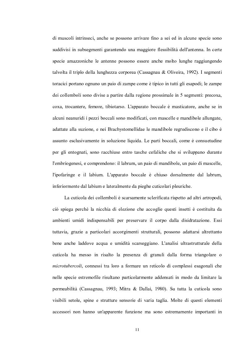 Anteprima della tesi: Variabilità e differenziazione genetica nella specie antartica Gomphiocephalus hodgsoni (Hexapoda, Collembola, Hypogastruridae), Pagina 8