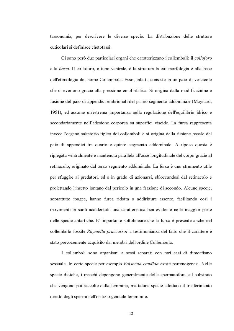 Anteprima della tesi: Variabilità e differenziazione genetica nella specie antartica Gomphiocephalus hodgsoni (Hexapoda, Collembola, Hypogastruridae), Pagina 9