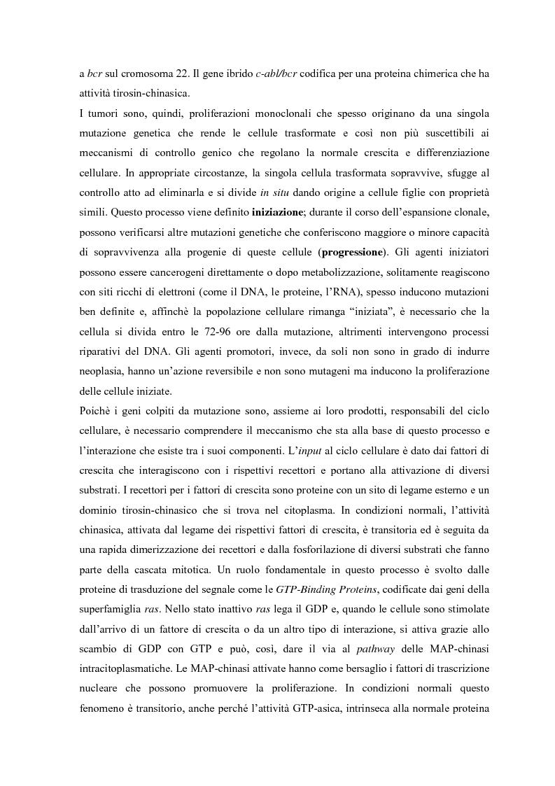 Anteprima della tesi: Parziale caratterizzazione del gene men1 nel gatto, Pagina 3