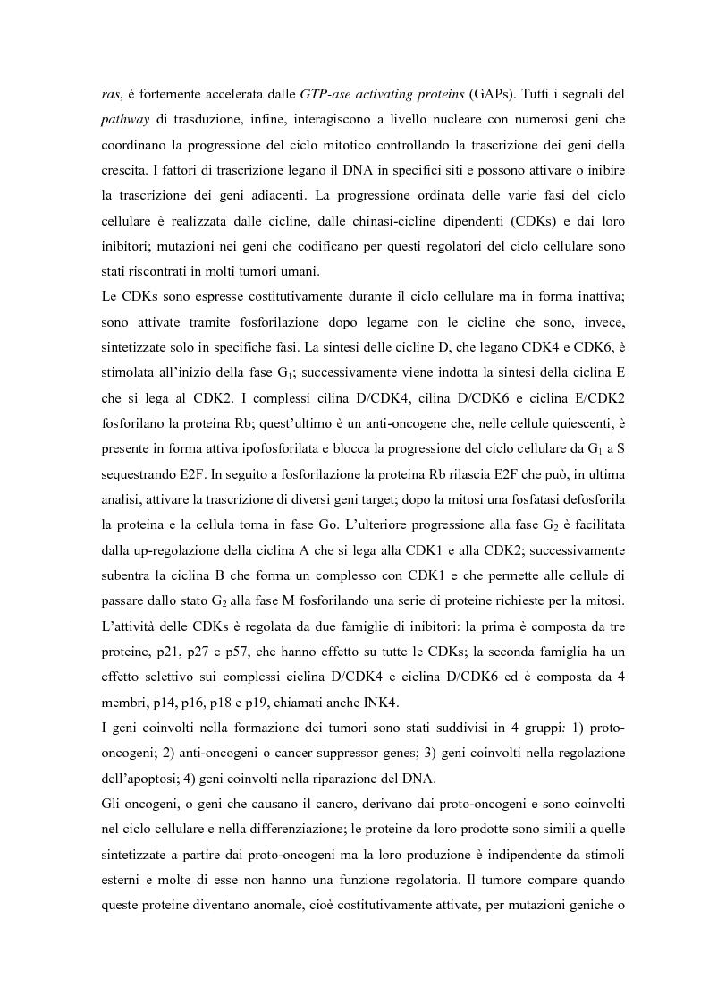 Anteprima della tesi: Parziale caratterizzazione del gene men1 nel gatto, Pagina 4