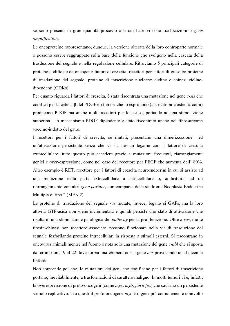 Anteprima della tesi: Parziale caratterizzazione del gene men1 nel gatto, Pagina 5