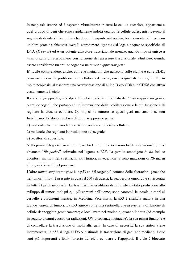 Anteprima della tesi: Parziale caratterizzazione del gene men1 nel gatto, Pagina 6