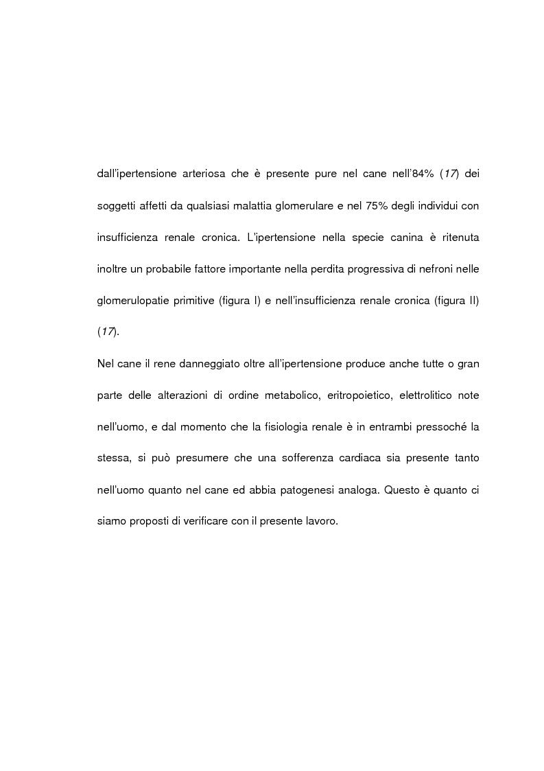 Anteprima della tesi: Studio nosografico dell'impegno cardiaco nelle malattie renali del cane, Pagina 2