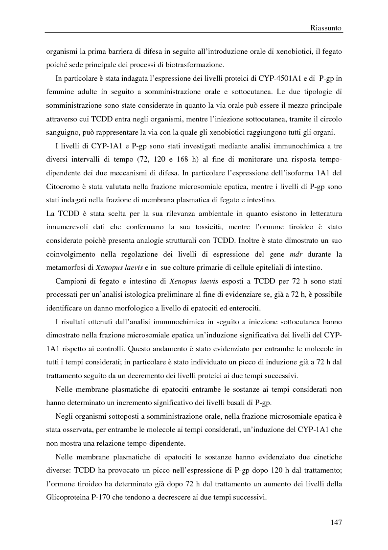 Anteprima della tesi: P-Glicoproteina e Citocromo P-450 in fegato e intestino di Xenopus laevis: modulazione dell'espressione da parte di TCDD e ormone tiroideo in seguito a somministrazione orale e sottocutanea, Pagina 2