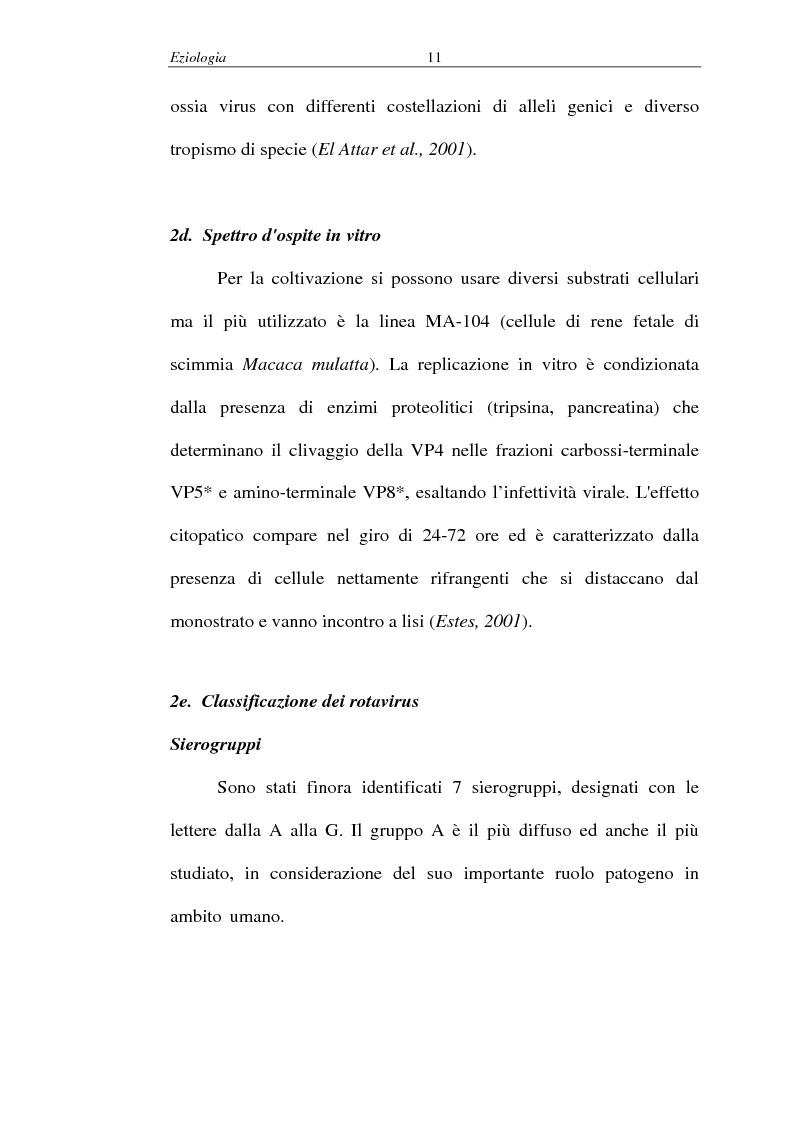 Anteprima della tesi: Malattie infettive virali - Identificazione di un nuovo allele del gene codificante per la proteina VP4 nei rotavirus, Pagina 7